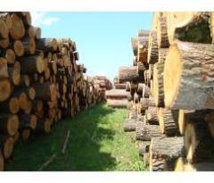 Round timber beech