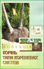 """Колекція / Гербарій """"Різні типи кореневих"""