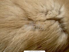 Natural fur of fox
