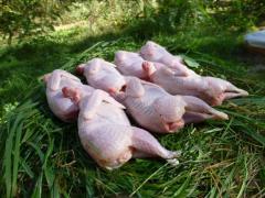 Carcasses are quail