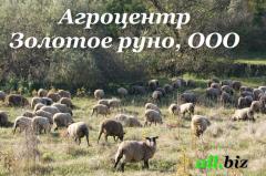 Мясо ягненка, купить мясо ягненка, в Украине, цена