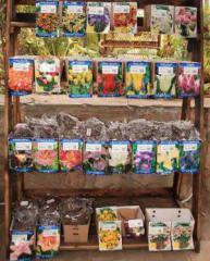 Распродажа  сортовых луковичных Днепропетровск