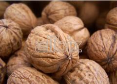 Орехи грецкие в скорлупе
