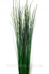 Беар трава