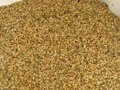 Utskho-suneli's seasoning