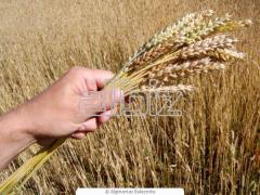 Окупка, продажа, экспорт сельскохозяйственных