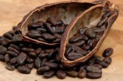 Cocoa extrac