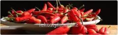 Стручковый перец, олеорезин