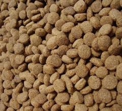 Dry feeds for animals in Ukraine to Buy, the