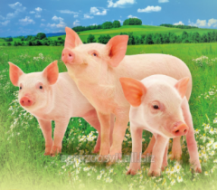 Premixes of 1-5% for pigs of P21-5SV+