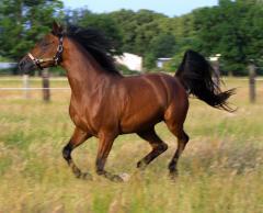 Комбикорма для тренировочных и спортивных лошадей