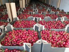 Fresh sweet cherry wholesale