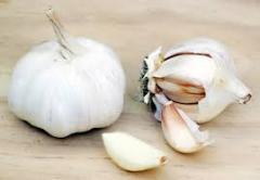 Essential oil of garlic