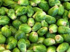Семена капусты брюссельской