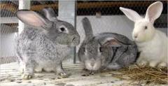 Полнорационные комбикорма, комбикорм для кролей от