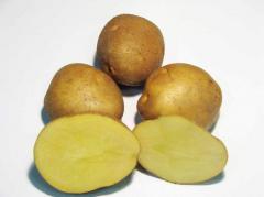 """Картофель семенной. Сорт """"Явир"""""""