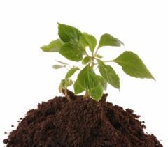 Soil on adding