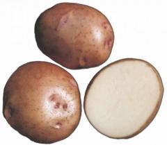 """Картофель семенной. Сорт """"Фантазия"""""""