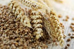 Bran barley in Ukraine to Buy, the Price, the Ph