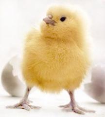 Комбикорм для цыплят-бройлеров TM Standart ПК 5-1