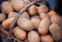 Potatoes, wholesale of vegetables and a kartofela