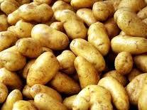 Potatoes of sredneranniya, our company