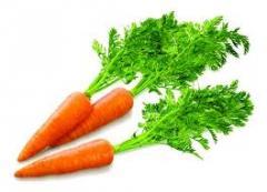 Carrots fresh, sale of vegetables of our LLC Frukt