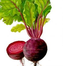 Beet table, wholesale of vegetables makes our LLC