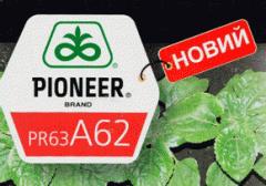 Семена подсолнечника Пионер ПР63А62 (Pioneer