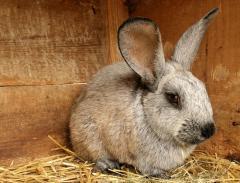 Комбикорм ПРЕМИУМ для кроликов РОСТ К92-2 от 30
