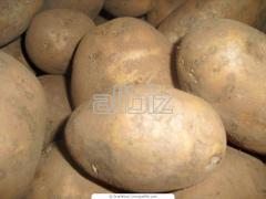Картофель семенной оптом, Картофель семенной от