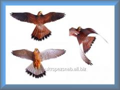 ХИЩНИК 3 – визуальный отпугиватель птиц