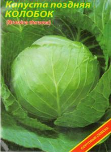 Seeds cabbage late Kolobok