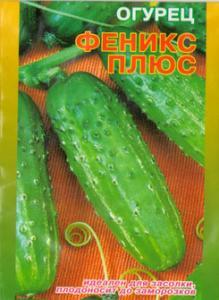 Seeds cucumber Phoenix Plus
