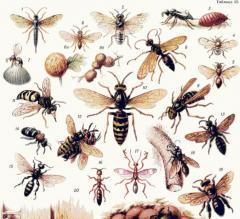 Отпугиватели насекомых - трихограмма