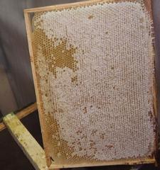 Honey in honeycombs, comb honey