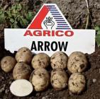 Ранние сорта элитного картофеля