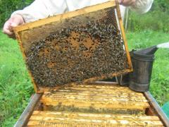 Пчелопакеты с пчелами