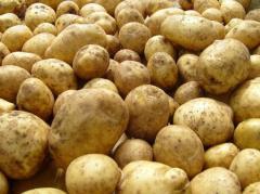 Table to buy potatoes in Ukraine