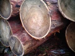 Леса кругляка элитных пород древесины из Сибири.