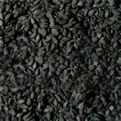 Кунжут Чорний