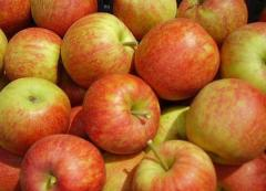 Apples, sale, Shargorod, Ukraine