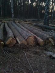 Round timber pine