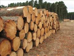 The round timber is pine. Wood round timber.
