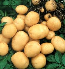 Картошка урожай 2017 года