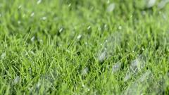 Смесь злаковых трав