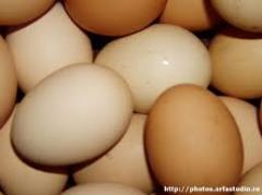 Яйца инкубационные, купить цена фото Украина Киев Одесса породы Адлерская серебристая