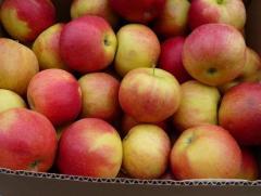 Apples Aydared sale, wholesale, Vinnytsia, Ukraine