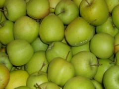 Apples Golden, sale, Shargorod, Ukraine