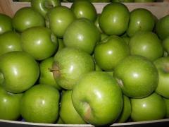 Simirenko's apples wholesale, sale, Ukraine